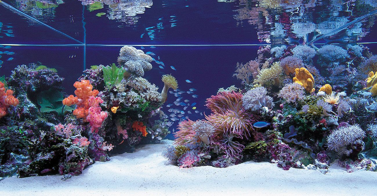 Saltwater aquarium - Beginners Guide To Saltwater Aquariums
