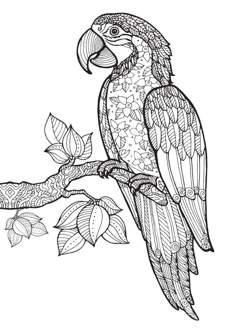 Terapia Da Sor 8 36 Photos Vk Animal Coloring Books Bird Coloring Pages Drawings