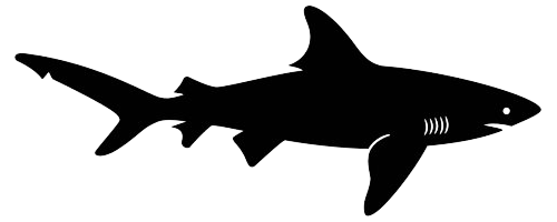 Shark Pencil Case Back To School Fun Fish Silhouette Shark Silhouette Animal Silhouette