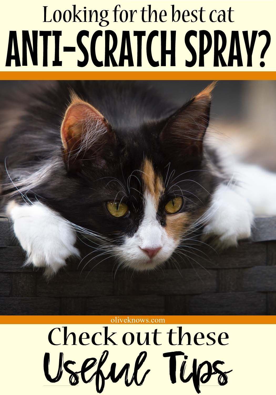 Pin on Tips for Cat Lovers