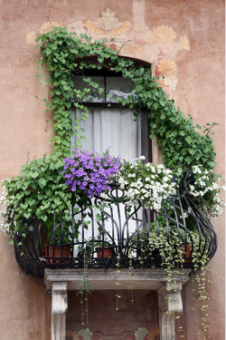 Cascading Floral Balcony - White and purple petunias along with other vined plants cascade from the wrought iron balcony. Seen in Italy. Color photograph by Donna Corless.