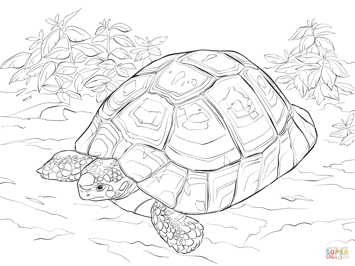 horsfields-tortoise-coloring-pages.png (1200×900) | Tortoise | Pinterest