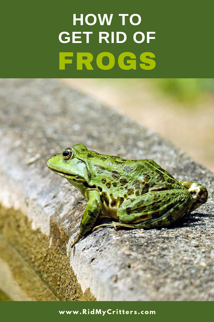 How to Get Rid of Frogs and Keep Them Away (Yard, Pool, or ...