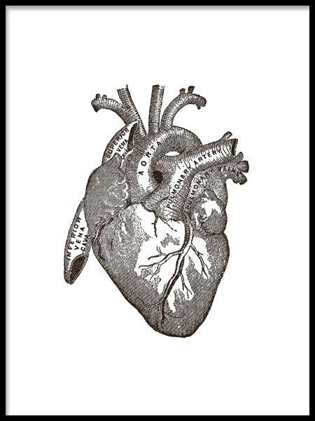 Plakat med illustrasjon av hjertets anatomi.