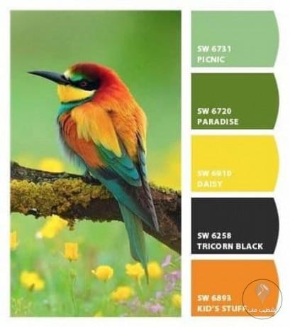 تناسق الألوان من الطبيعة 01 الطيور 2019 Color Schemes Colour Palettes Color Of Life Color Schemes