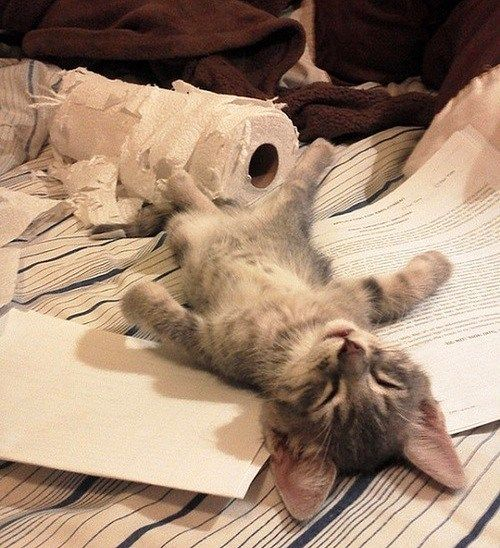 It's a tough job, ripping paper towels, but some kitty's gotta do it!