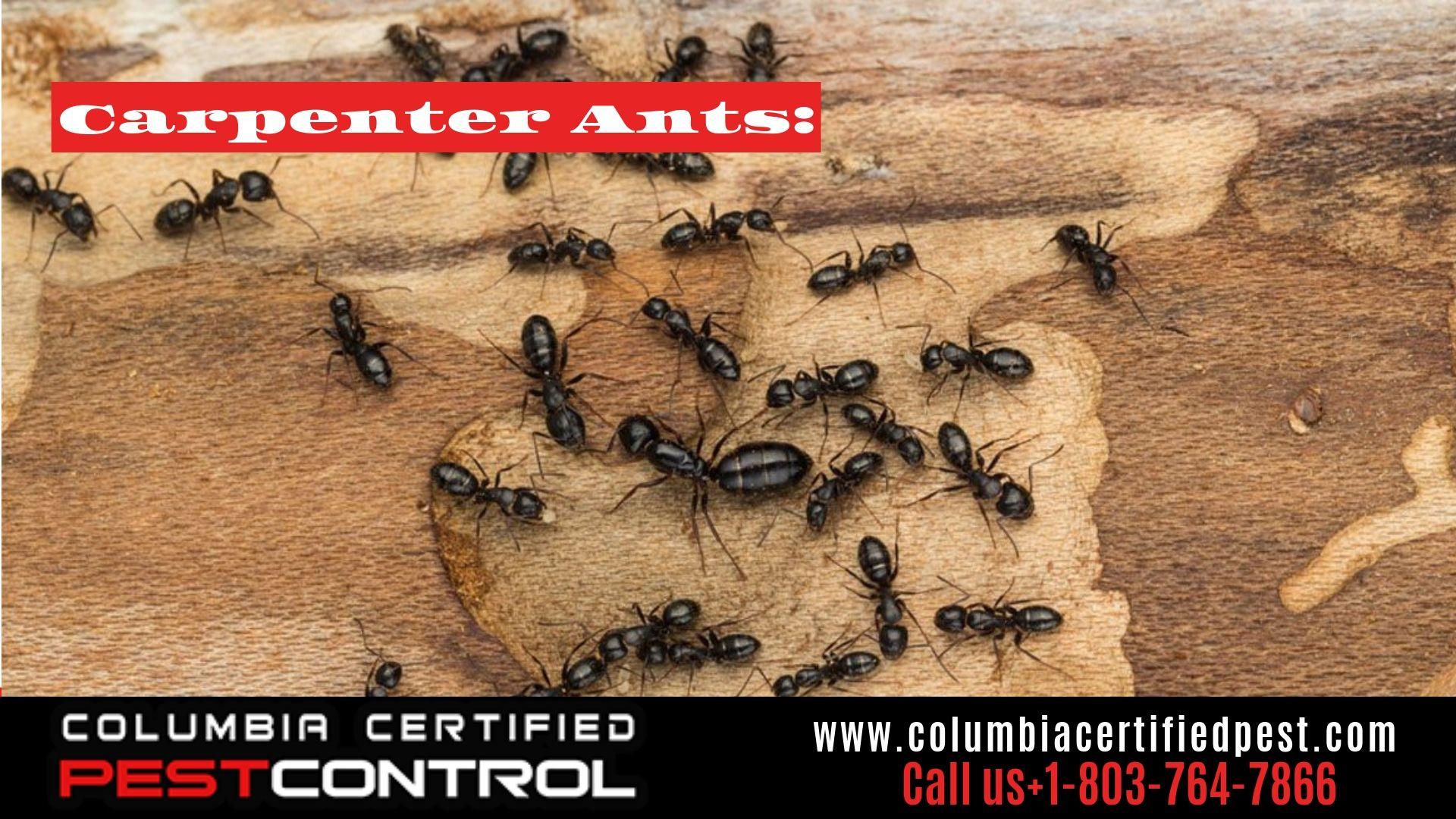 Ant Exterminators In Elgin Lexington Columbia Sc Fire Ant Pest Control Ant Pest Control Pest Control Types Of Ants