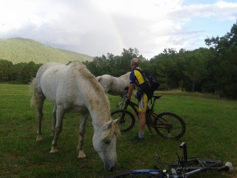 y ahora el #ciclista contra estos bonitos #caballos #ainsa #pirineo @zonazerobtt