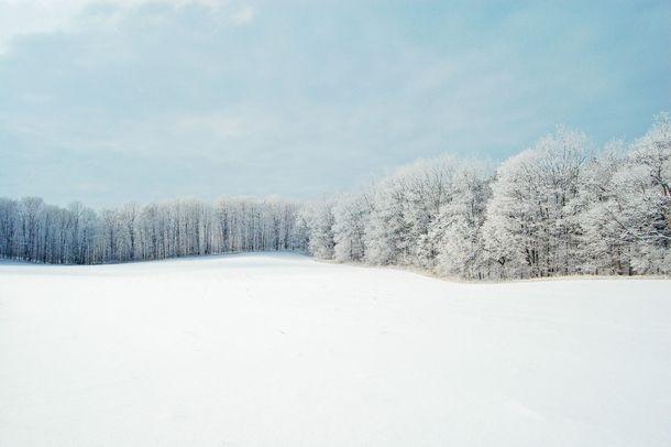 Winter Forest Near Toronto Canada  #winter #forest #near #toronto #canada #photography