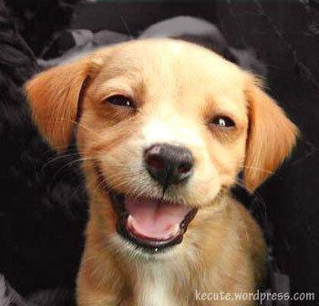 Cute happy Puppie
