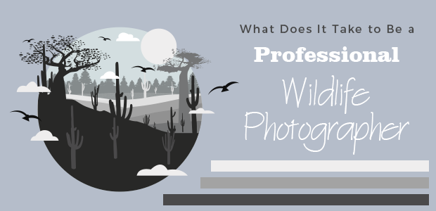 What Does It Take to Be a Professional Wildlife Photographer? #wildlifephotography #PhotographyIsArt #Professional