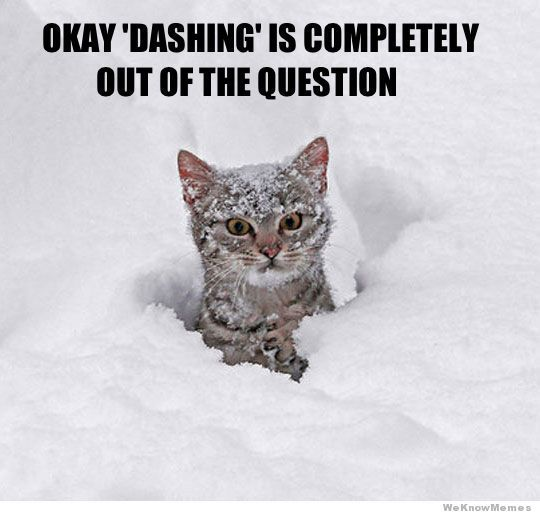 Oh Hell To The No Cats Dont Do Snow Fool Animal Humor Cats