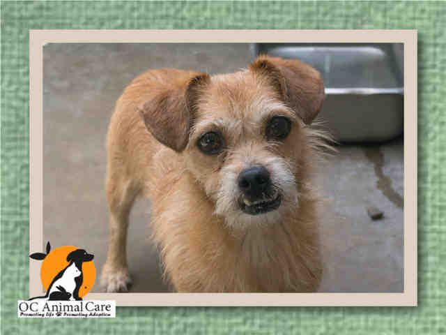 dog adoptions orange county ca