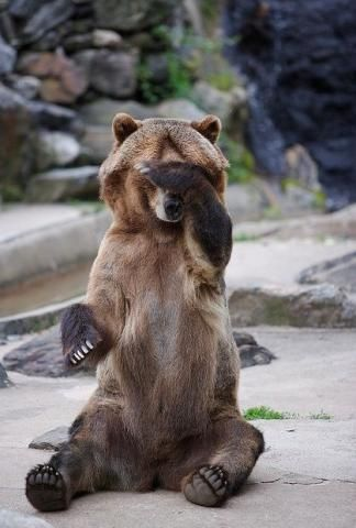 Pick: Funny Bear Reaction Of The Day #bears