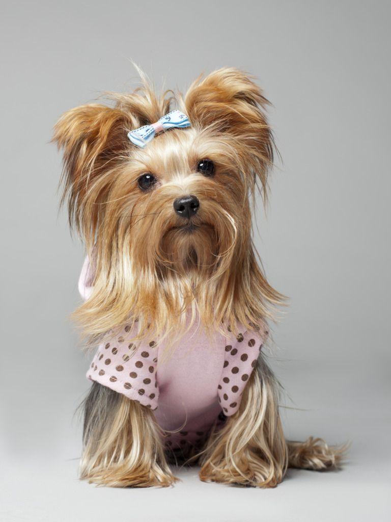 En TOP DOG buscan al mejor perro de España. ¡Ayúdame con tu voto a ganar más de 1.000€ en premios para mi peludo!