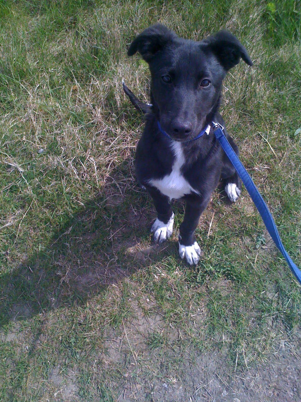 Finding My Fido Fix Dog Love Lurcher Canine