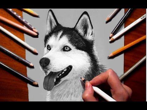 Pencil Drawing Siberian Husky Jasmina Susak How To Draw