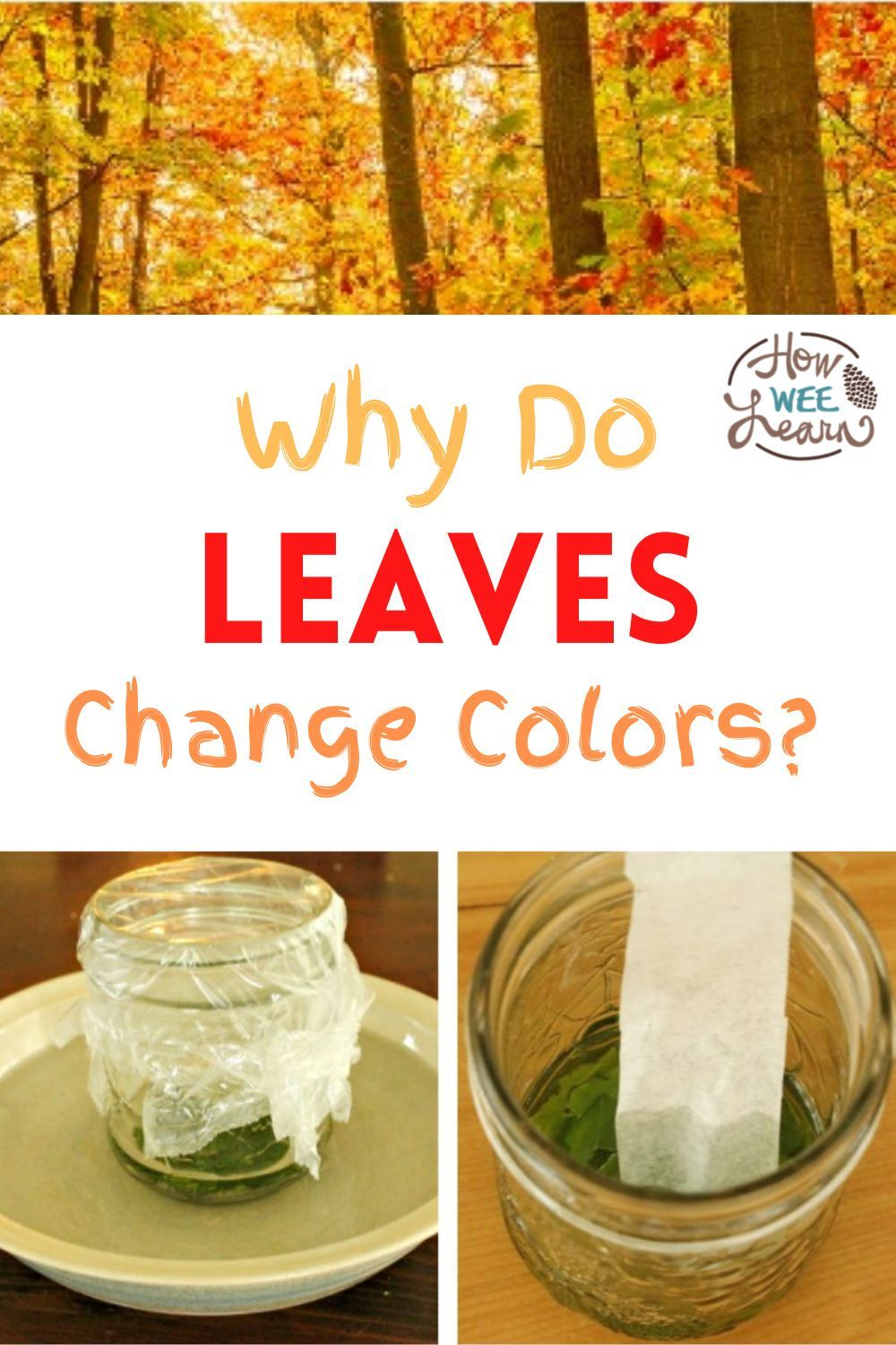 Science Experiments for Kids Why do Leaves Change Color