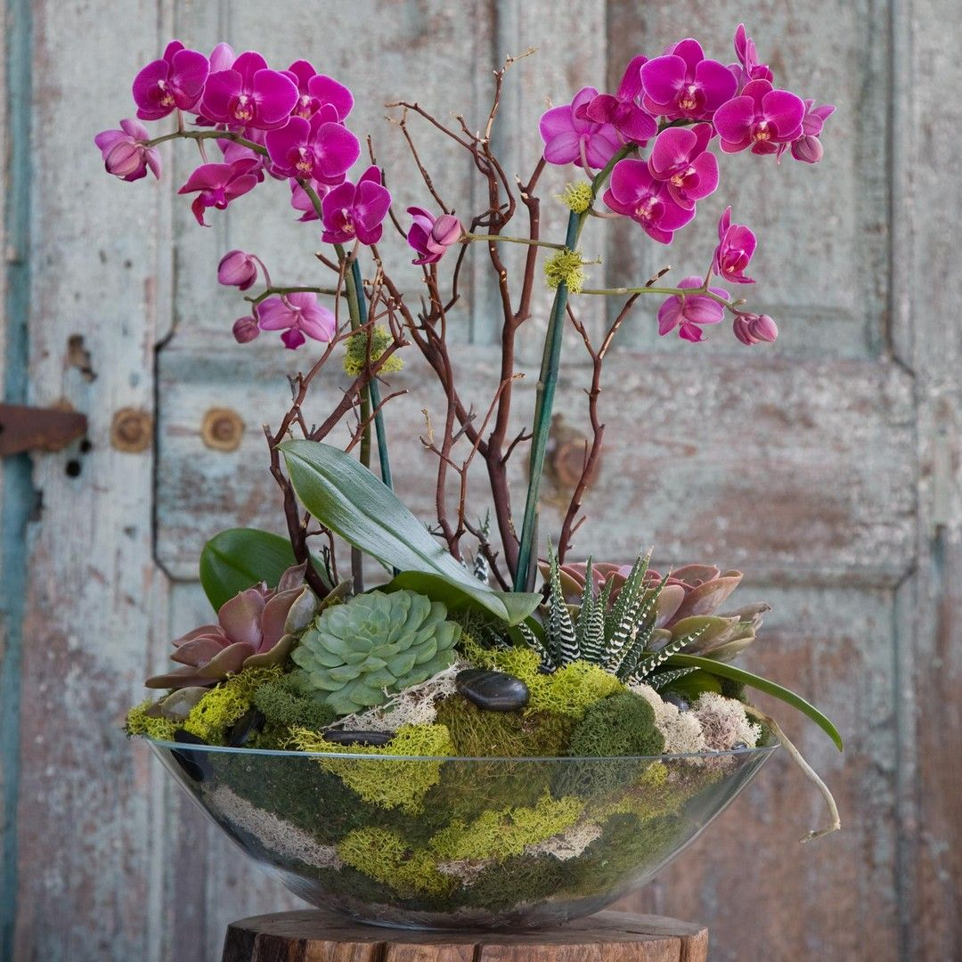 55 Best Orchid Arrangements with Succulents and Driftwood