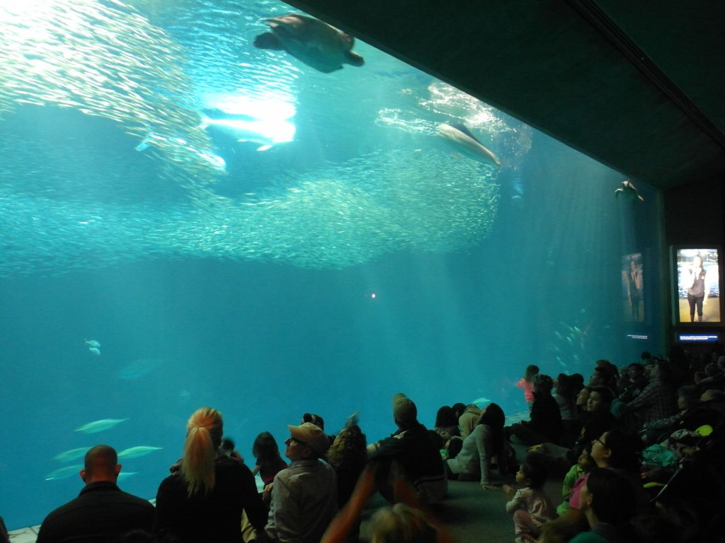 http 2bearbear monterey bay aquarium top attraction in