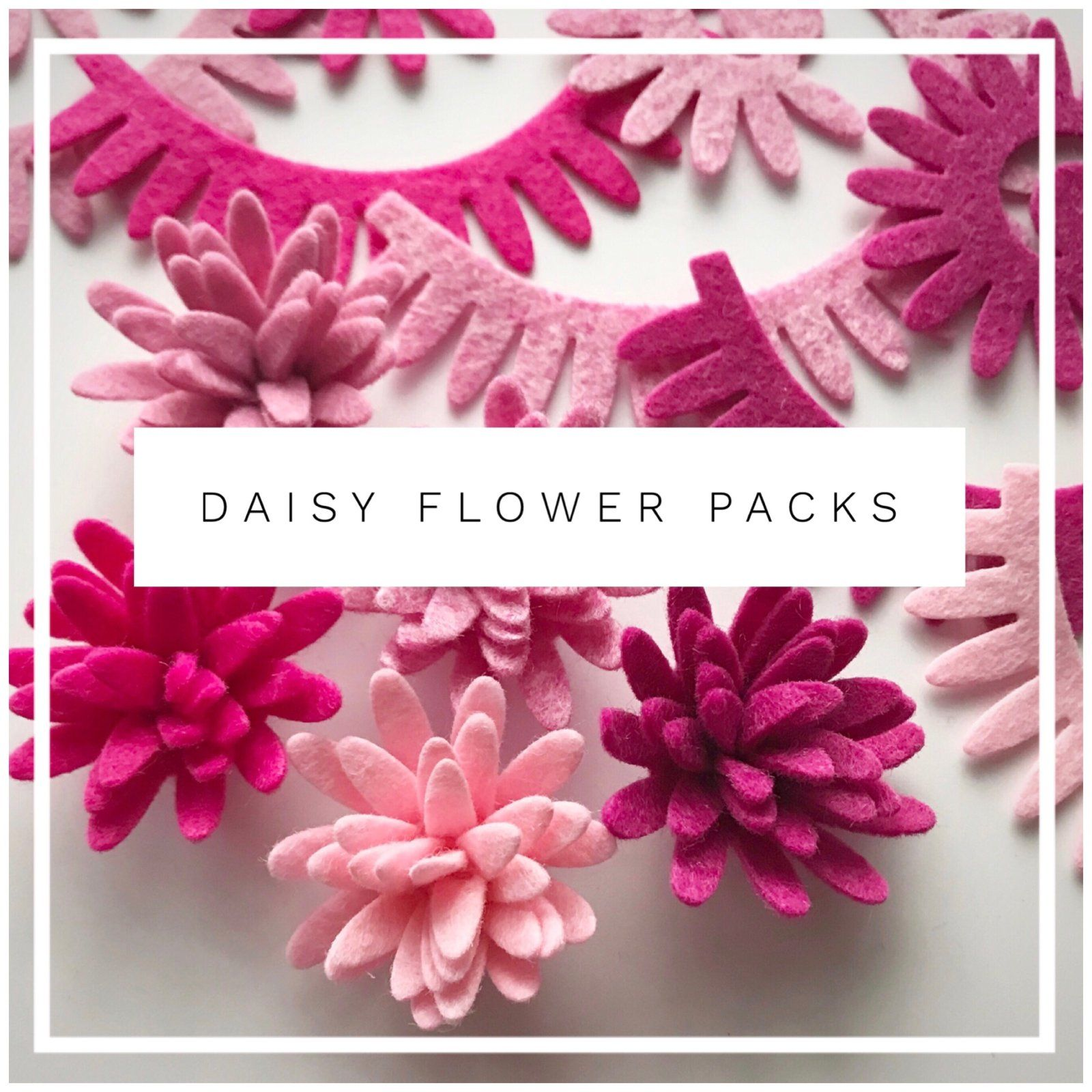 Daisy Flower Packsdelightful Pink Colours In This Pack Are Pink