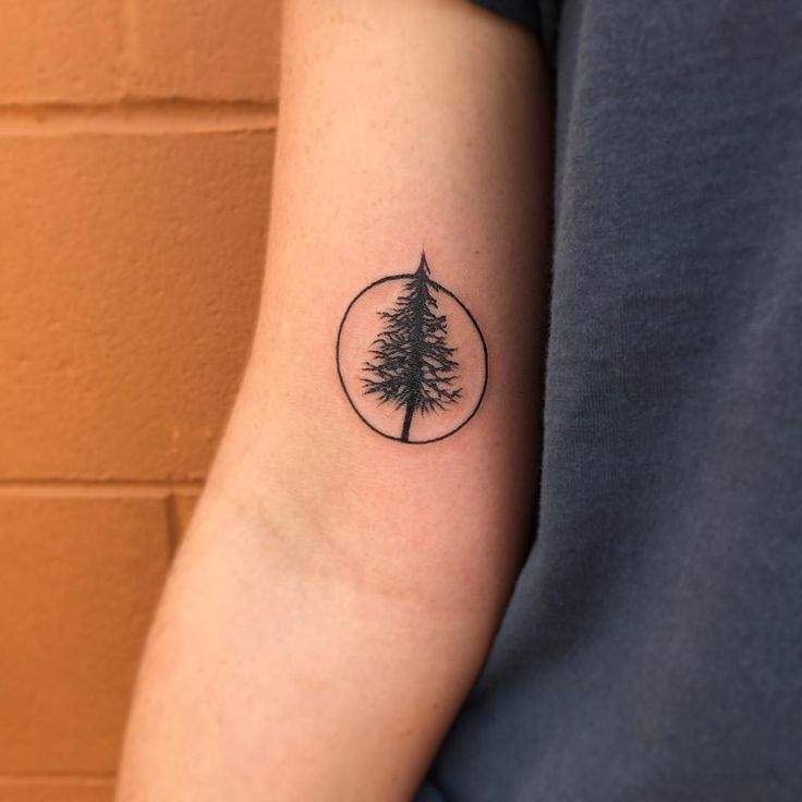 Sienceandnature4you Top Circle Tattoos Simple Tree Tattoo Pine Tattoo