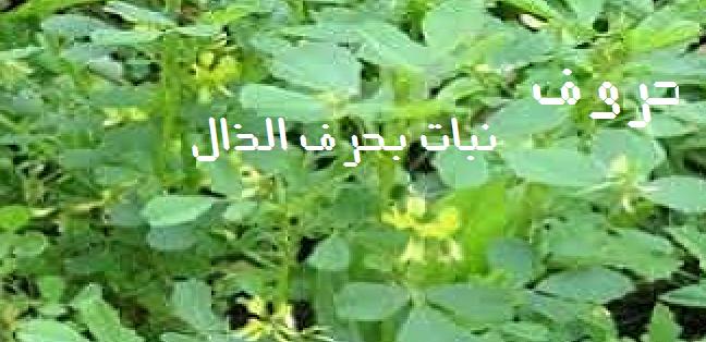 أسماء نبات بحرف الذال حروف الهجاء العربية Herbs Parsley
