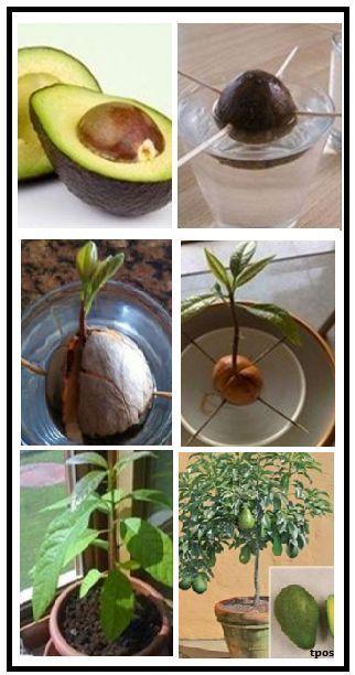 Pflanzen - gartendeko ideen #backgardenideas
