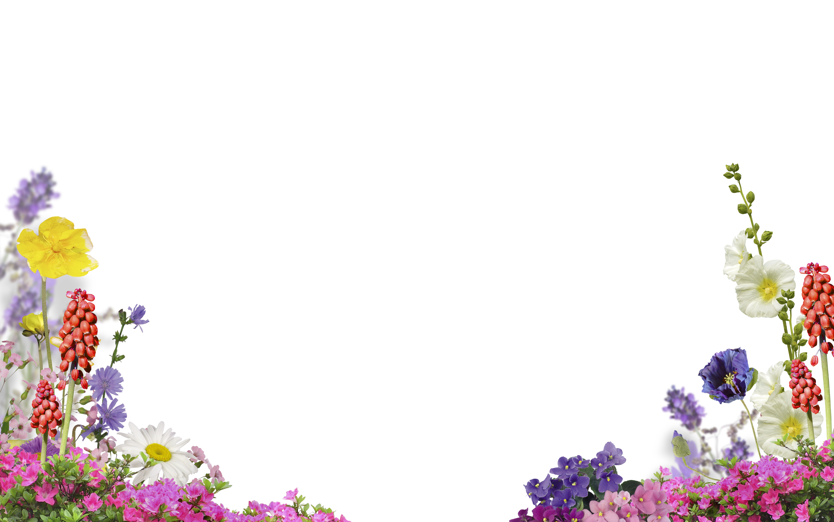 Free Flower Photo Overlay Photoshop Overlays From Mroverlay Free