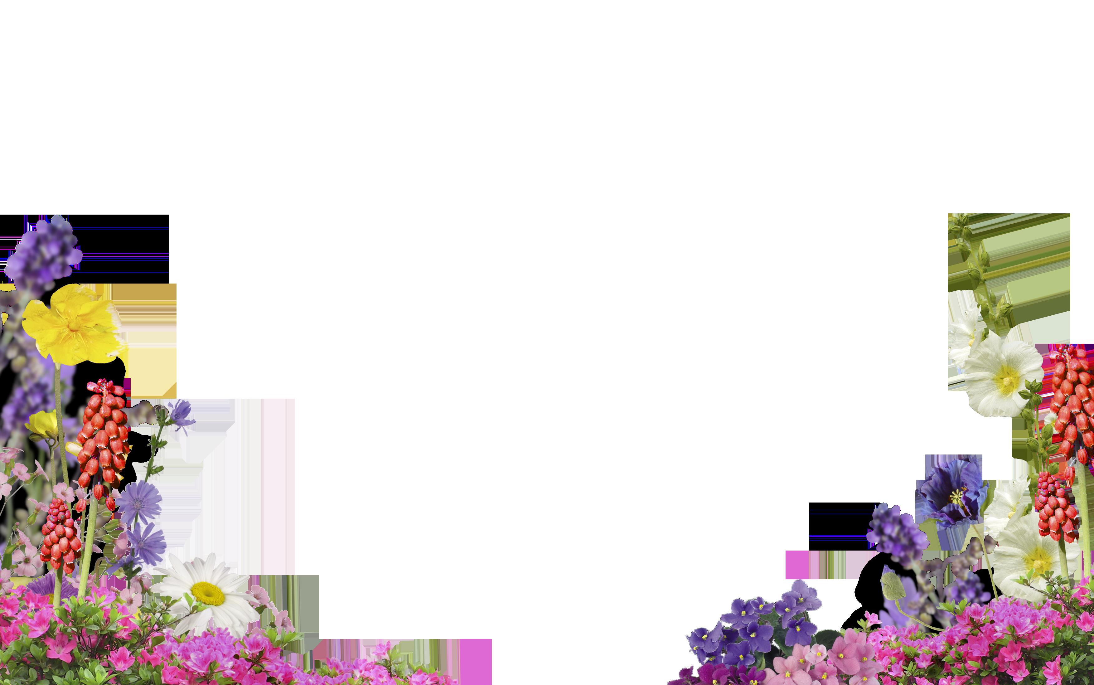 Free Flower Photo Overlay Photoshop Overlays From Mroverlay Photo Overlays Photoshop Backgrounds Free Flower Photos