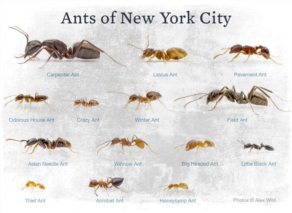 ants with hearts   Google Search. ants with hearts   Google Search   Ants    Pinterest   Ant and Insects