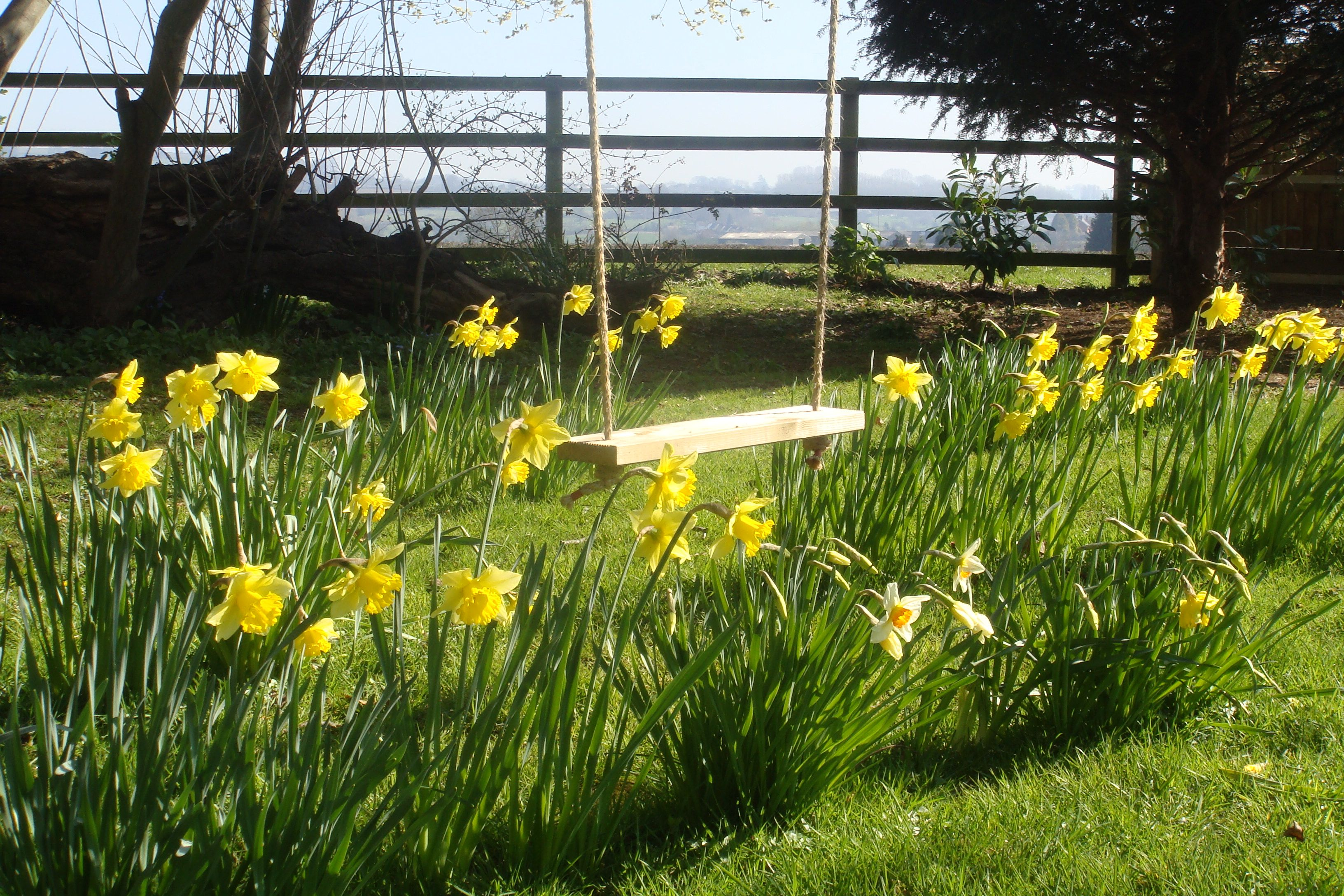 Daffodils and swing in an english garden march oh to be in