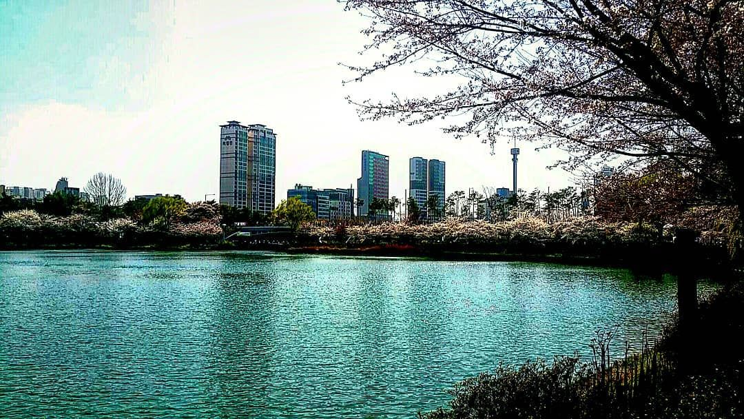 [New] The 10 Best Home Decor (with Pictures) -  Spring/Autumn #lifeisart #Jamsil #Seokchonlake #seoul #석촌호수 #잠실 #cherryblossom #sky #서울 #한국 #traveljournal #travel #thebeautyofkorea #photography #perspective #pic #picture #daily #2019 #nofilter #iseoulu