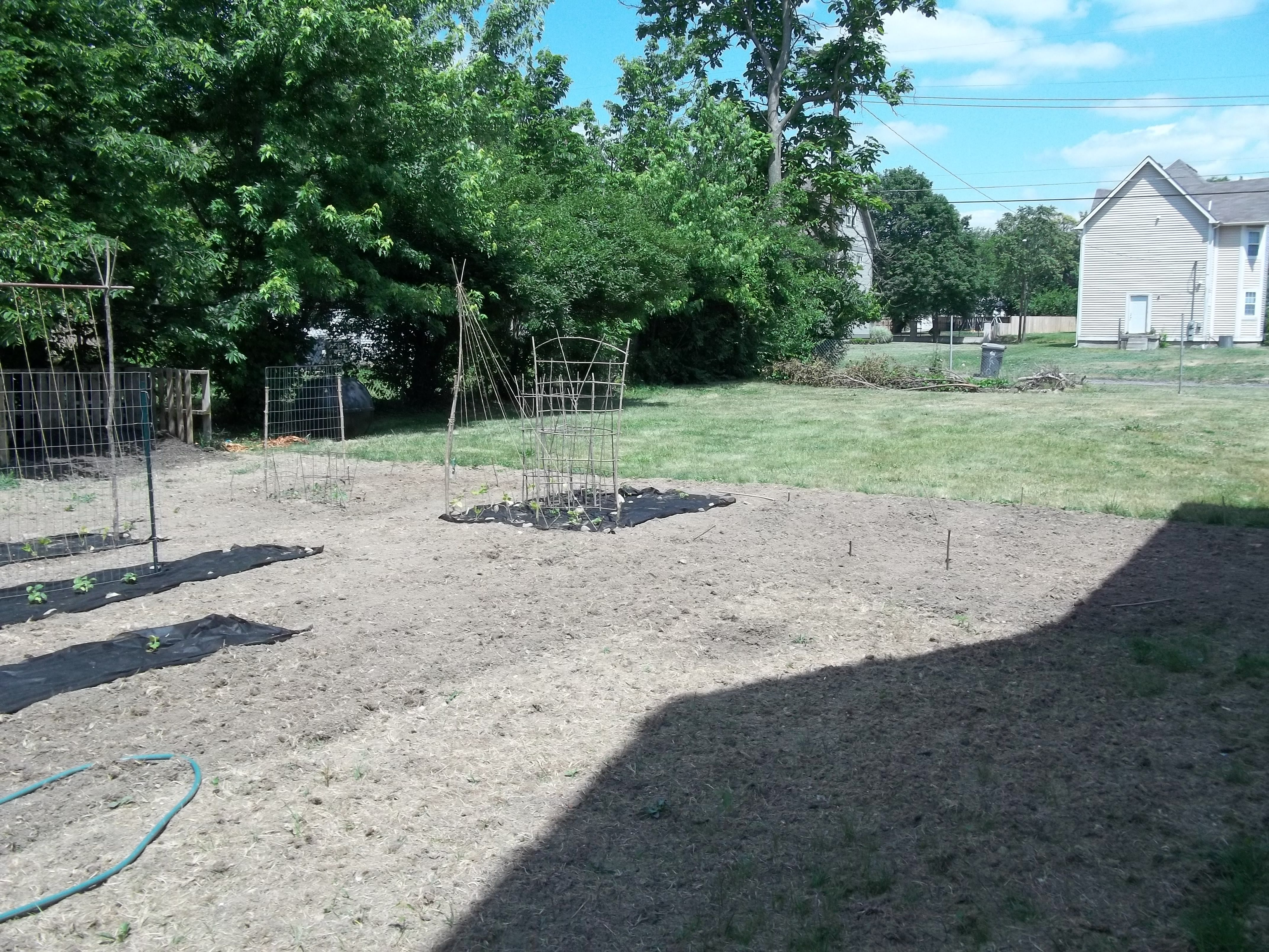 new picture of the garden