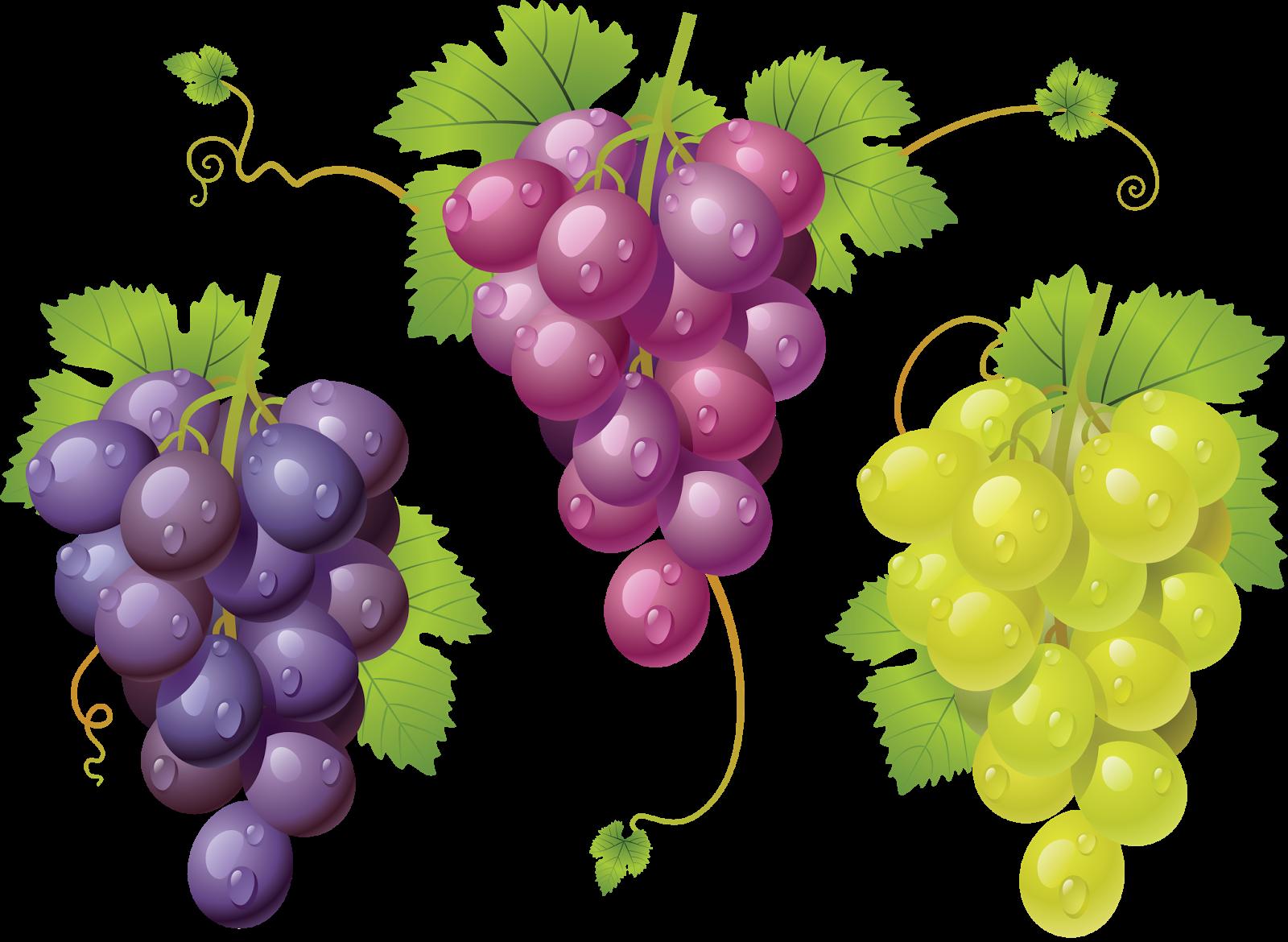 артист картинки ягод винограда сообществе есть