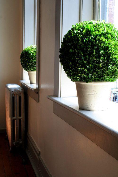 Moss or faux hedge leaves on foam ball. Paint terracotta pot cream
