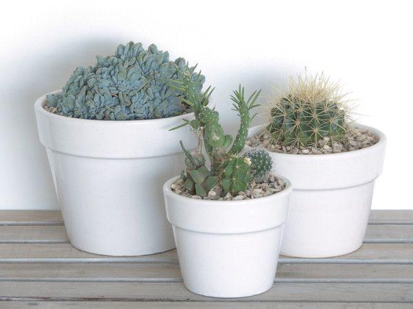 DIY Tips no.2 - How to make a mini succulent garden in a pot