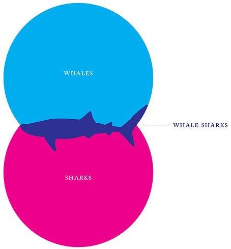 Whaleshark venn diagram whale sharks random stuff and humor venn diagram of whale shark ccuart Gallery