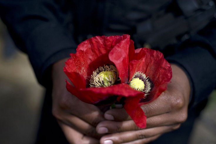 May 23, 2011. A police officer shows a poppy flower during an operation to destroy a plantation in Tuinima village, 315 km northeast of Guatemala City.