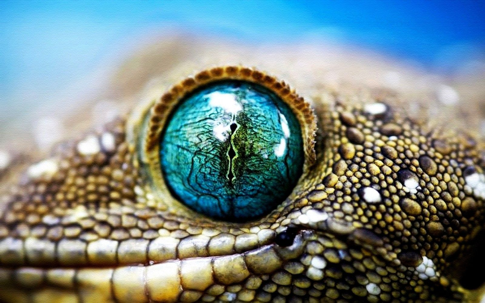 Lizard Eye&quot- Photographic Prints by BevsArtCreation | Redbubble