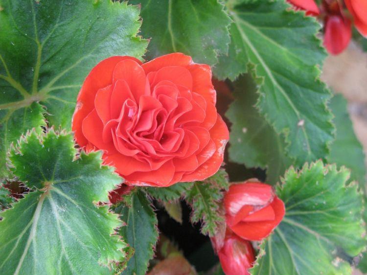Haus Garten 6 Bluhende Zimmerpflanzen Arten Fur Ein Schones