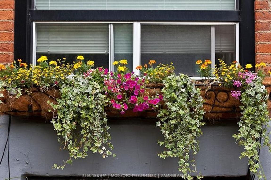 32 Beautiful Ideas Cascading Flowers For Window Boxes 11 Plants