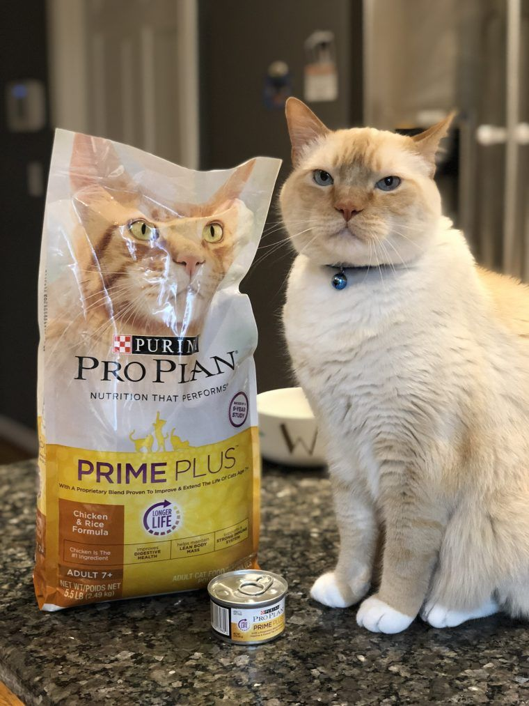 7 year old cat diet new purina formula at petsmart old