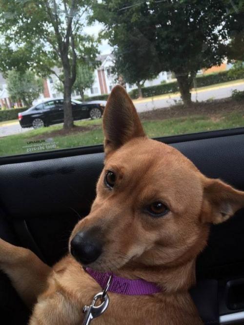 Adopt Nilla On Beautiful Dogs Animal Rescue Save Animals
