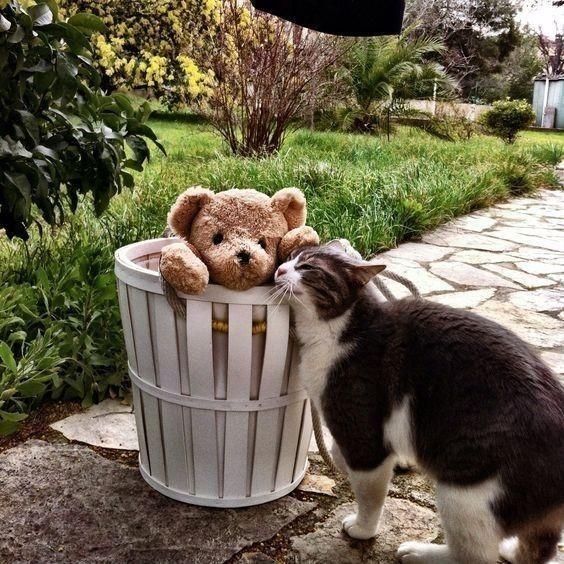 Teddys, Schönes und Altes #bearplushtoy