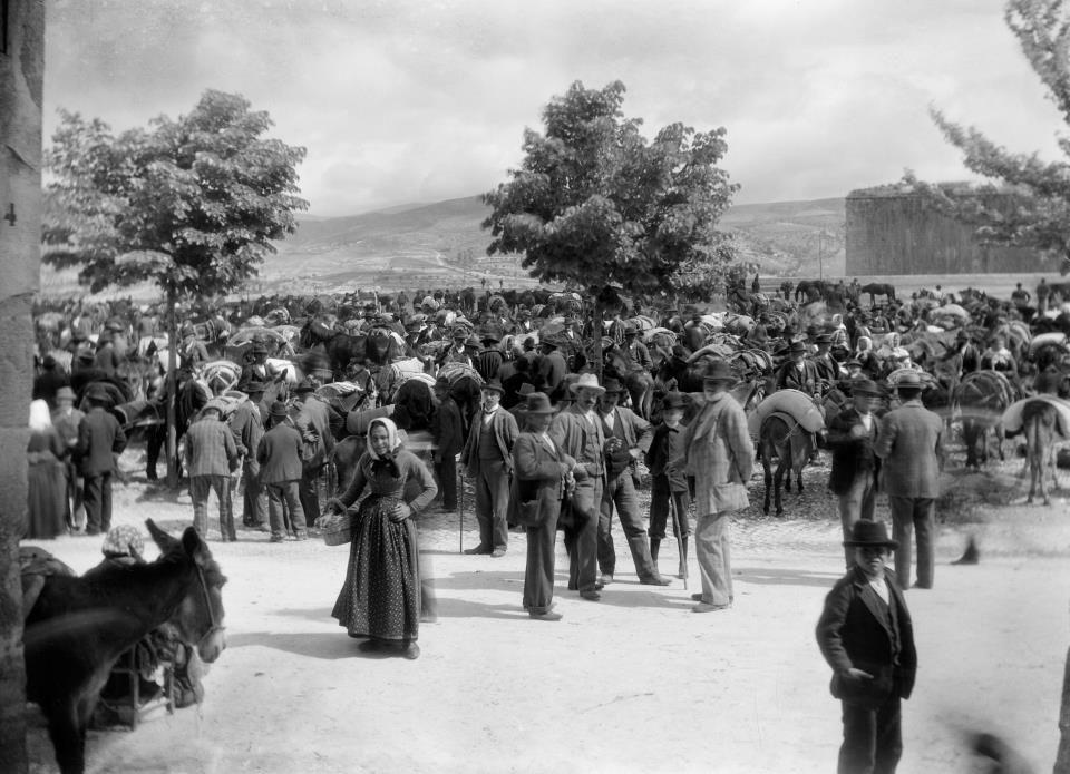 Thomas Ashby, L'Aquila, Mercato del bestiame, 1901  #Abruzzo #travel #italy #abruzzosegreto #SecretOfAbruzzo #laquila #photography #Ashby #SecretOfAbruzzo #history
