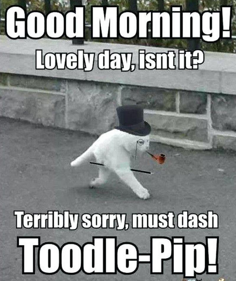 101 Good Morning Memes For Wishing A Beautiful Day For Him Her Morning Memes Funny Good Morning Memes Good Morning Meme