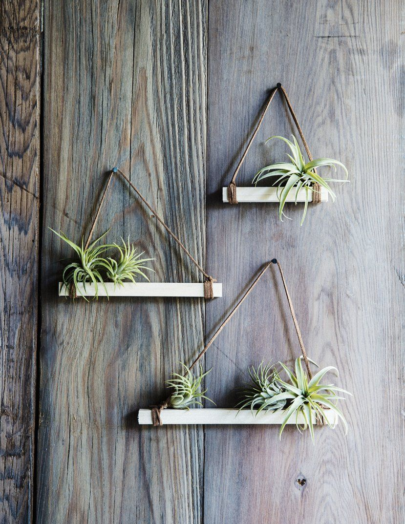 "Easy DIY air plant trapezes is part of Air plants decor, Air plants diy, Plant display ideas, Hanging air plants, Air plant display, Plant decor -  Sunset Publishing Add a bit of whimsy to your front door with a trio of air plant hangers  We have a hunch these miniature trapezes for our favorite epiphytes will be the conversation starter at your holiday parties—particularly if you make them yourself! Here's how we did it Materials1 Squarecut wood dowel 36""x ½"" x …"