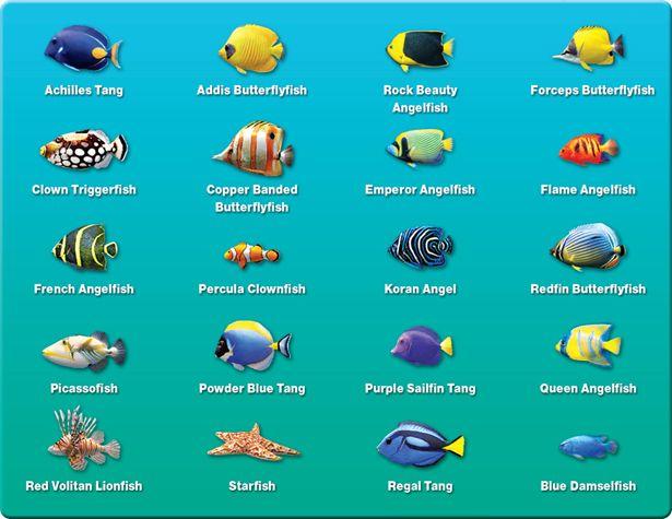 Marine aquarium screensaver deluxe 3 30 fish new for Fish tank fish types
