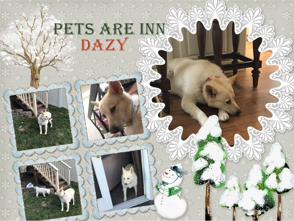 Dazy Jingled Her Way Into Our Hearts She Is So Sweet She Made Us Smile With Each Jingle Jangle Of Her Holiday Necklace Petsa Family Pet Dog Boarding Pets